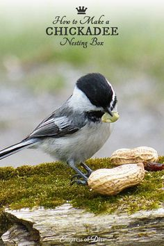 How to make a chickadee nesting box