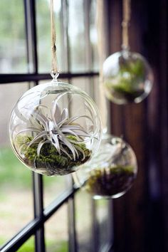 Let's make a living room decoration using air plants to decorate your living room. This air plant display idea will help you decorate your home using this unique plant. These indoor plants ne… Hanging Glass Planters, Hanging Air Plants, Hanging Terrarium, Air Plant Terrarium, Glass Terrarium, Terrarium Diy, Indoor Plants, Air Plant Display, Plant Decor