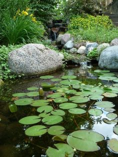 Water Garden, Pond, Outdoor Oasis, Landscaping Ideas