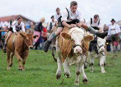 Germans riding cows (Photoshop Battles – 8 pics)