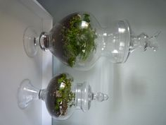 I made these two terrariums with the help of The Fern and Mossery website. I hope they don't die.
