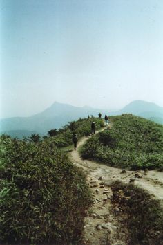 somethingvain:    film camera photography of the way up maclehose trail in hong kong, taken by me