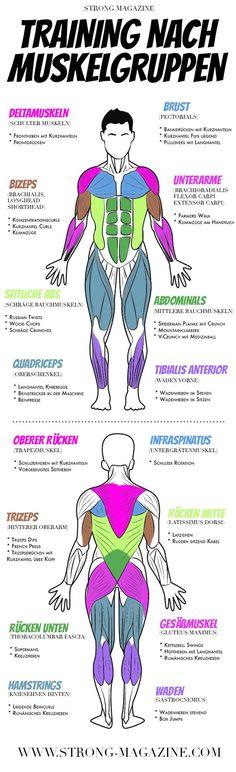 Training nach Muskelgruppen - Infografik mit Fitness Übungen für alle Muskeln (Fitness Motivation Cuerpos)