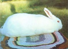 Kansas State University veterinarian Randy Kidd shares essential information about raising rabbits for food and profit. Originally published as