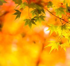 Autumn color by nao3