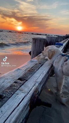 Cute Little Animals, Cute Funny Animals, Funny Dogs, Beautiful Nature Scenes, Animals Beautiful, Beautiful Images, Cute Dogs And Puppies, I Love Dogs, Doggies