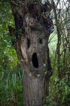Tree Faces Funny | Tree Face 2 | 1Funny.com