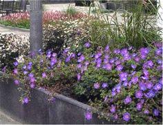 betondingen-plantenbak-kl