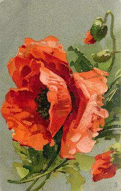 Three poppies, large central flower, half open buds above & below to right (1905), vintage postcard - C. Klein