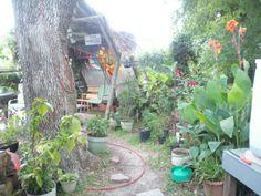 Like my backyard Oasis?   Its georgous when things begin blooming.
