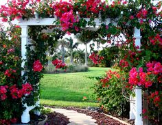 Fall in my Florida Garden, This is one of my favorite times to garden in Florida. It's cooled down and plants are more abundant in the garde...