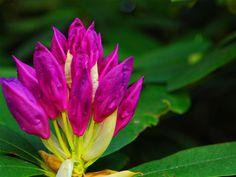 Der Park Seleger Moor ist mit seiner Vielfalt an Pflanzen und Tieren und dank der wunderschönen Parklandschaft mit Bächen und Teichen ein sehr dankbares 'Jagdgebiet' für Fotografen. Nehmen Sie unbedingt Ihre Kamera mit! Park, Rainbow Colors, All The Colors, Switzerland, Flora, Plants, Pond, Families, Photographers