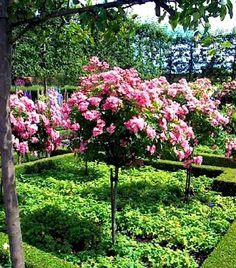 Rose Garden - Alnwick Castle Garden, UK