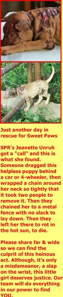 Please help SPR with her vet care, http://www.sweetpawsrescue.org/donate/ Sweet Paws Rescue https://www.facebook.com/photo.php?fbid=10157162583390858&set=pcb.10157162585010858&type=3&theater