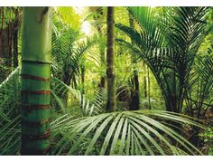 fototaPET djungel - Sök på Google
