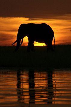 Africa   Elephant at Sunset.  Lake Kariba, Zimbabwe   © Marleen Lammers
