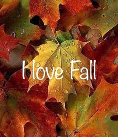 My exact feelings about autumn 🍂🍁💖 Lexa Y Clarke, Autumn Scenes, Fall Wallpaper, Happy Fall Y'all, Fall Pictures, Hello Autumn, Fall Harvest, Autumn Inspiration, Fall Pumpkins