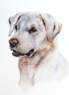 Labrador painted by watercolour artist Jane Davies