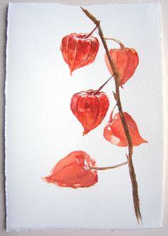 Aquarelle peinture alkékenge / petites aquarelles 7 5 x par rakla