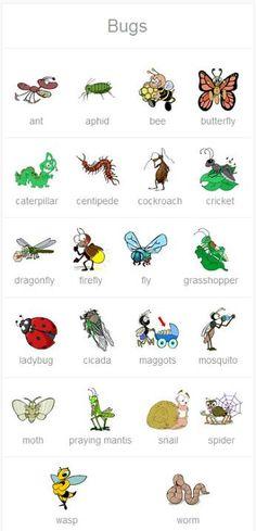Bugs in English!