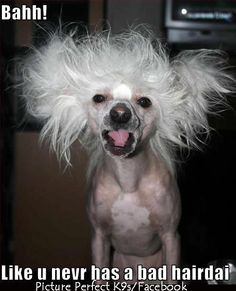 77 Best Bad Hair Day Lol Images Crazy People Delusional People