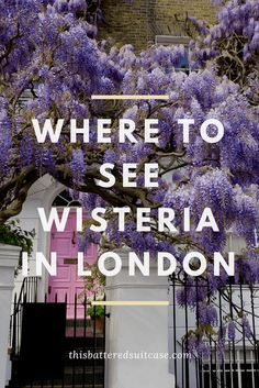 Where to See Wisteria in London - This Battered Suitcase