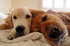 Good morning all! (Kobe & Riley)
