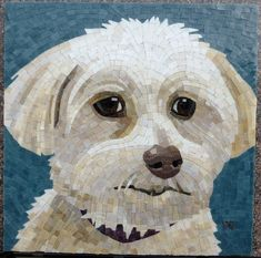 https://flic.kr/p/dyLddi | Cosmo Ready to Grout | 12 x 12 inches, stained glass, he is a Malti-Poo...
