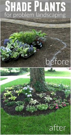 Shady areas of your yard can be difficult but it doesn't have to be if you know what type of plants you need. These Shade Plants will thrive and make your landscaping beautiful! planting Shade Plants for Problem Landscape - Hoosier Homemade Outdoor Landscaping, Front Yard Landscaping, Backyard Landscaping, Easy Landscaping Ideas, Shady Backyard Ideas, Landscaping Melbourne, Florida Landscaping, Cozy Backyard, Large Backyard