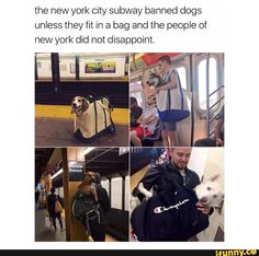 Hahhahaha / I imagine a small shibe trying to fit a bigger than herself akita in a bag and carrying him around.