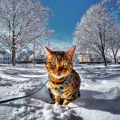 SNOW!!!  https://pbs.twimg.com/media/CUb-PttU8AAk_dI.jpg:large