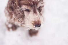 Bahia in the snow