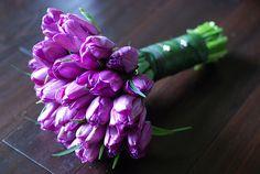 Purple Tulips! Love
