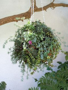 If you're a passionate gardener with only a small space, this hanging ball makes for the perfect project. Succulents and ground covers are ideally suited to this type of arrangement
