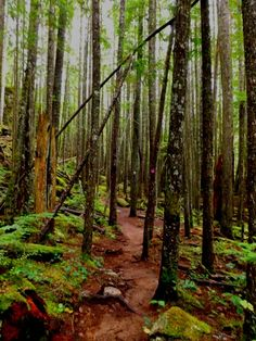 Information about the Sea to Summit Trail in Squamish, BC, article on www.MetaphoricalPlatypus.com #hiking #seatosummit #trails #bc #britishcolumbia #canada #squamish #activities #fitness #fun #forest #mountain