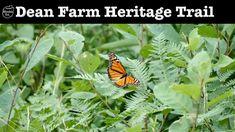 DEAN FARM HERITAGE TRAIL - Stony Creek, NY
