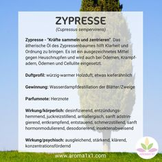 """Cypress - """"gather and center forces"""". The essential oil of the cypress tree helps to bring Family Motto, Eat The Rainbow, Varicose Veins, Holistic Healing, Young Living, Alternative Medicine, The Ordinary, Aromatherapy, Body Care"""