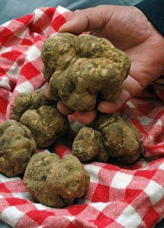 Tout savoir sur les truffes
