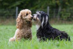 """i kissed a girl....""  Copyright: SITZ UND BLITZ Hundefotografie"