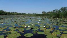 Okavangó? nem ez is a Tisza tó, döbbenetes hasonlóság, www.tavitura.hu