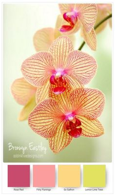 Stampin\' Up! Colour Inspiration from #addinktivedesigns  Climbing Orchid Bundle, Bronwyn Eastley, Independent Stampin\' Up! Demonstrator, Australia - more colour swatches in my blog post!