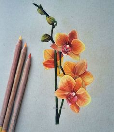 flower color pencil drawing