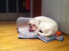 #Lulu with #lampshade