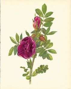 Use coupon code PINTEREST to save 10% off of your purchase! Gorgeous VINTAGE ROSE PRINT Purple Rose Antique by UpcycleFarmer