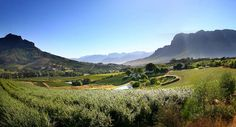 A view from Alluvia Specialist Winery in the beautiful Banhoek Valley just outside of Stellenbosch South African Wine, Wine Tourism, Tourist Office, Cape Town South Africa, Table Mountain, Wine Country, The World's Greatest, Beautiful World, Scenery