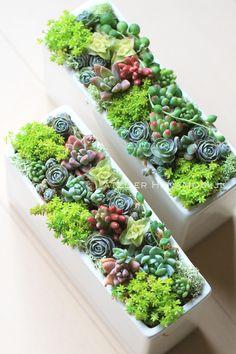 smallスクエア陶器多肉植物+セダム寄せ植えC