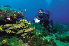 Mergulho no Arquipélago de Fernando de Noronha (PE)