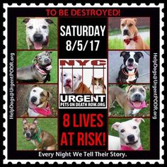 TO BE DESTROYED 08/05/17 - - Info   To rescue a Death Row Dog, Please read this:http://information.urgentpodr.org/adoption-info-and-list-of-rescues/  To view the full album, please click here:http://nycdogs.urgentpodr.org/tbd-dogs-page/ -  Click for info & Current Status: http://nycdogs.urgentpodr.org/to-be-destroyed-4915/