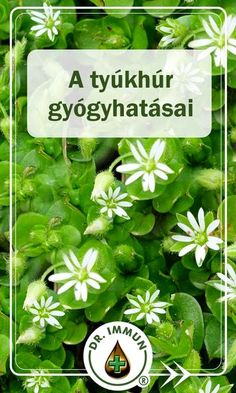 Healthy Drinks, Home Remedies, Healthy Life, Herbalism, The Cure, Vitamins, Food And Drink, Health Fitness, Herbs