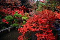 鮮やかな色とりどりの紅葉に染まった毘沙門堂